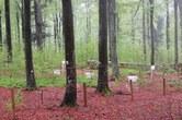 In phosphorarmen Gebieten ziehen Bäume den Nährstoff aus organischem Material, beispielsweise aus verrottendem Laub. Foto: Professur für Bodenökologie