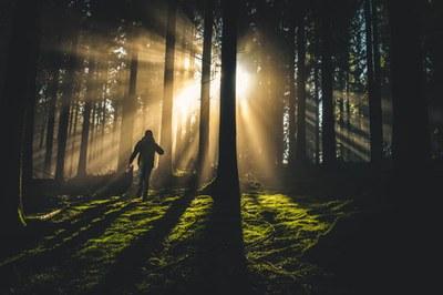 Den Wald verstehen (04.04.2018)