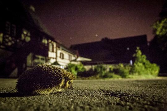 Wildtiere in Siedlungsräumen (15.04.2020)